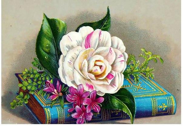 Белые розы Сибири